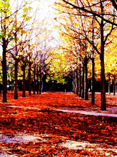 red yellow autumn paris