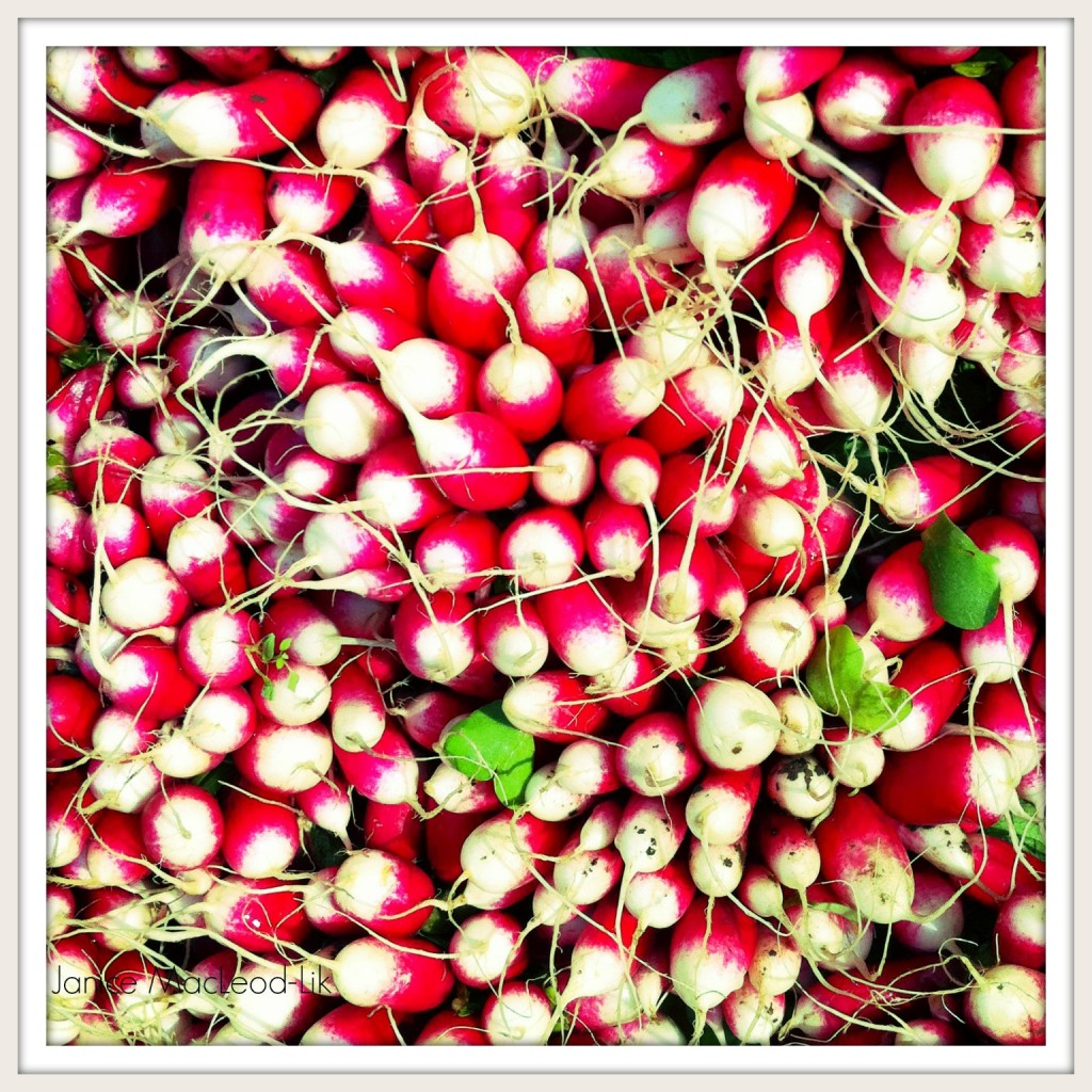 radishes janice macleod