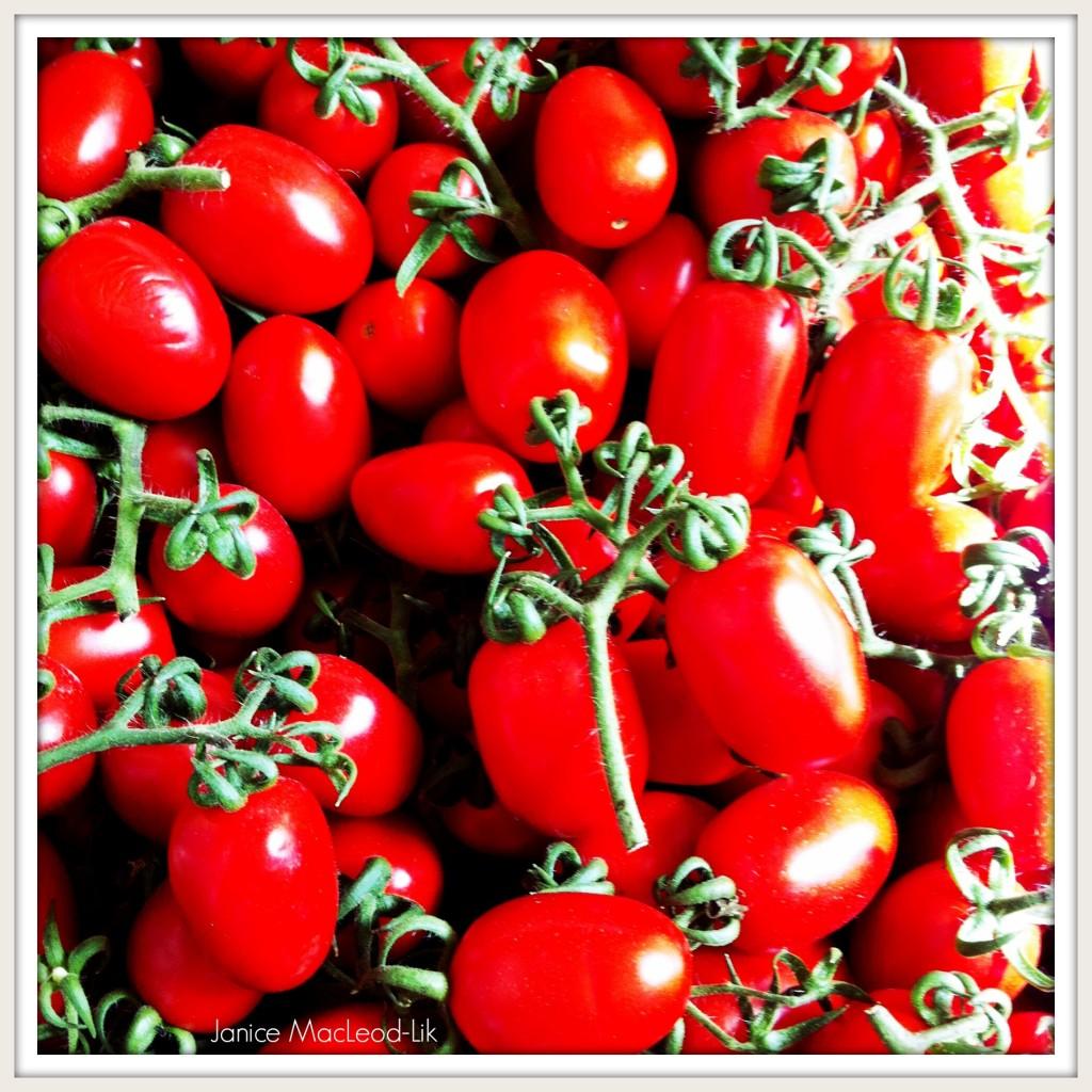 tomato janice macleod