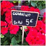French Flower Markets and Spring Fever