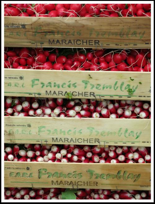 paris market red radish sm