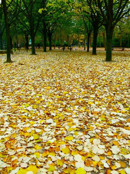 autumn in jardin du luxembourg paris